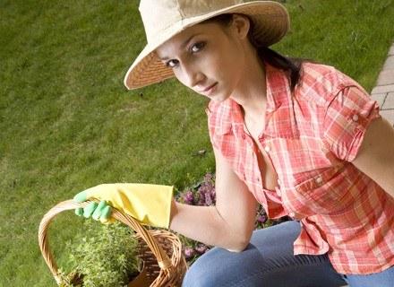 Zanim wybierzesz roślinę ozdobną, sprawdź, czy nie zaszkodzi twojemu zdrowiu.