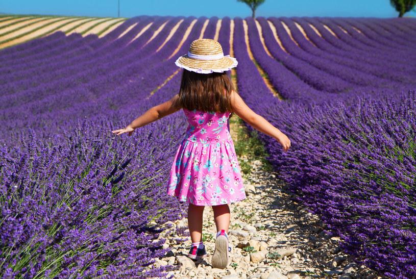 Zapach lawendy uspokaja, łagodzi skutki stresu emocjonalnego i napięcia nerwowego /123RF/PICSEL