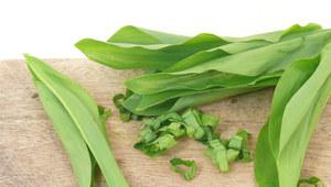 Zasady bezpiecznego stosowania ziołoleków