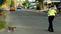 Zatrzymał ruch, by przez jezdnie mógł przejść kotek