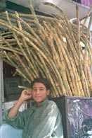 Zbiory bambusa /Encyklopedia Internautica