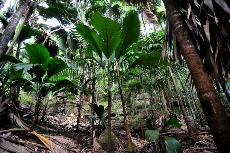 Zdaniem geologów to najstarsze na Ziemi wyspy na oceanie /AFP