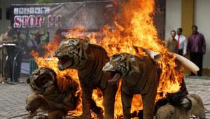 Zdjęcie dnia: Spłonęły nawet tygrysy