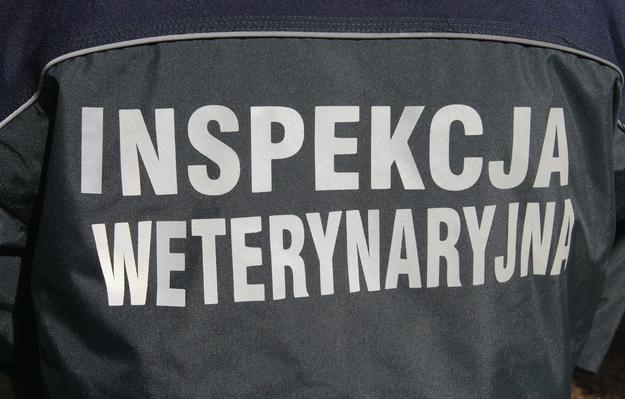 Zdjęcie ilustracyjne /Stanisław Kowalczuk /Agencja SE/East News