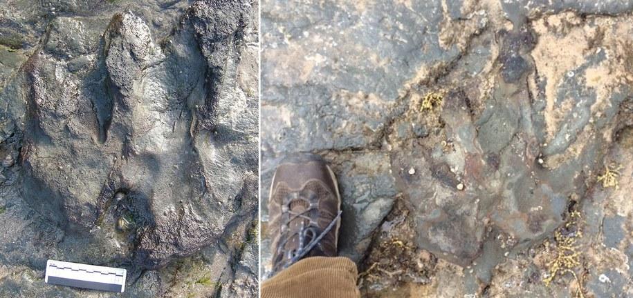 Zdjęcie odcisku stopy dinozaura przed i po zniszczeniu /PARKS VICTORIA /PAP/EPA