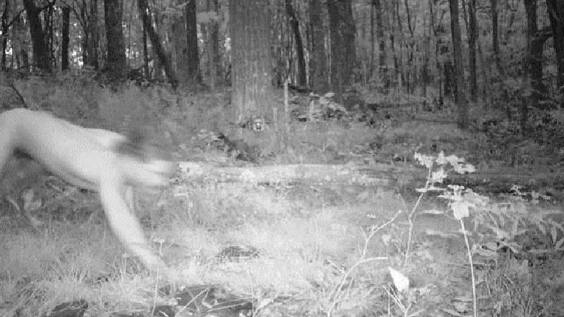 Zdjęcie z leśnej fotopułapki, która uchwiciła Czecha /Internet
