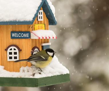 Zdrowe dokarmianie ptaków bez chleba