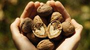 Zdrowie w nasionach