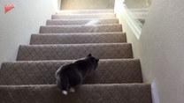 Zejście po schodach okazało się zbyt dużym wyzwaniem