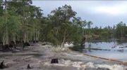 Ziemia błyskawicznie wchłonęła fragment lasu
