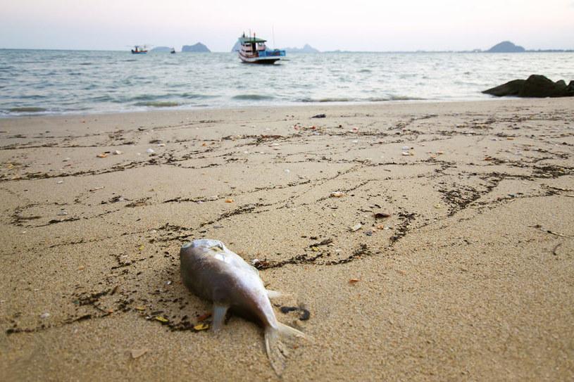 Ziemskie oceany są w opłakanym stanie. To przez zwiększoną emisję dwutlenku węgla /123RF/PICSEL