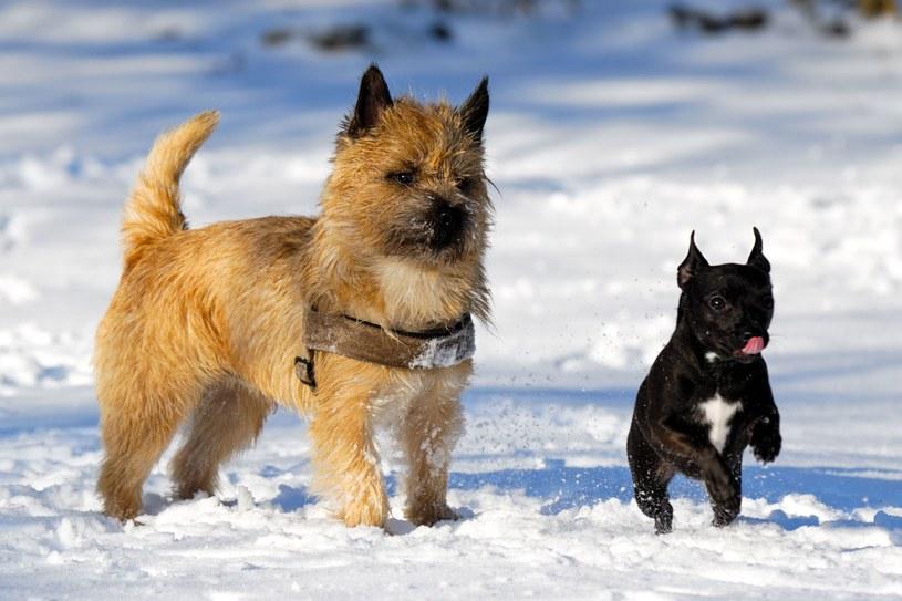 Zimą sól dokucza psim łapom /123RF/PICSEL
