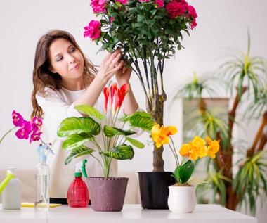Zimowe formowanie roślin doniczkowych