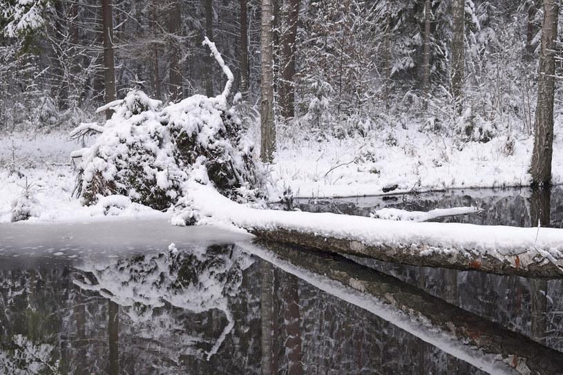 Zimowe Podlasie /materiały prasowe