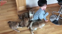 Zmasowany atak szczeniaków. Chłopiec nie miał szans