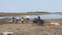 Znaleziony na wybrzeżu drapieżnik mierzył blisko 9 metrów