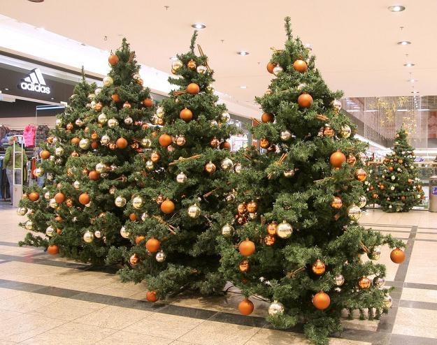 """Znamiona """"świątecznej gorączki"""", fot. Damian Klamka /East News"""