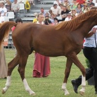 Znamy listę koni na aukcję