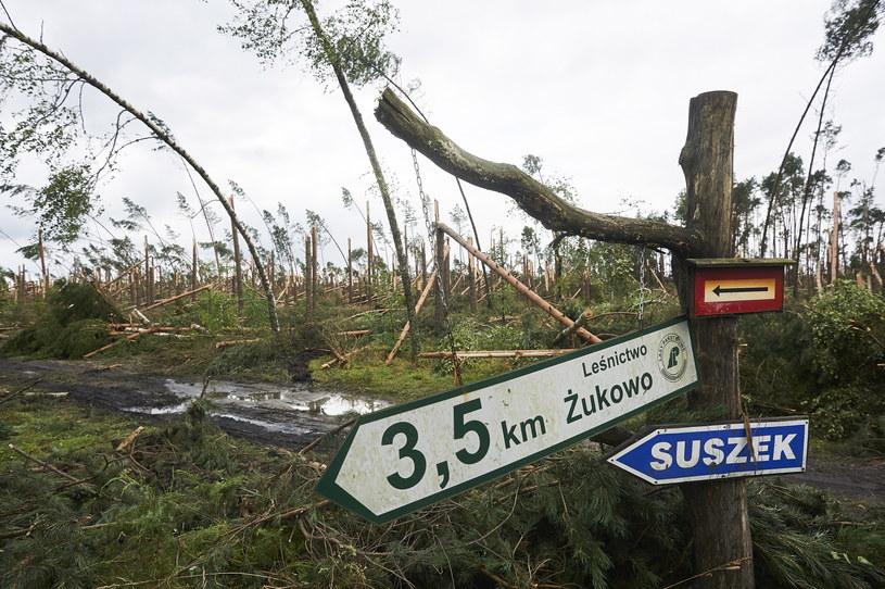Zniszczony przez nawałnicę las w Suszku /Dominik Kulaszewicz /PAP