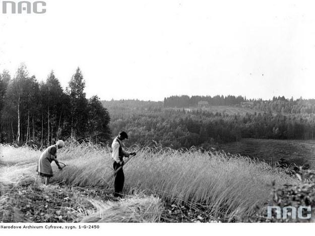 Żniwa w Burzynku k. Krakowa (rok 1930) /Z archiwum Narodowego Archiwum Cyfrowego