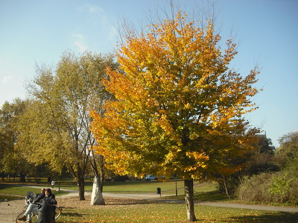 jesień w Parku Nowowiejskim