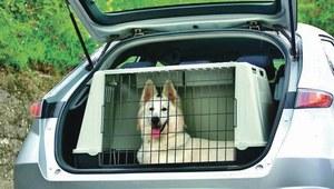 Zwierzak i bezpieczeństwo