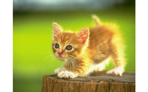 Album, gł. ze zdjęciami kotów :)