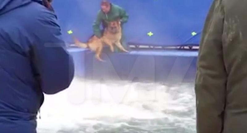 Zwierzę było wyraźnie przestraszone /TMZ /YouTube