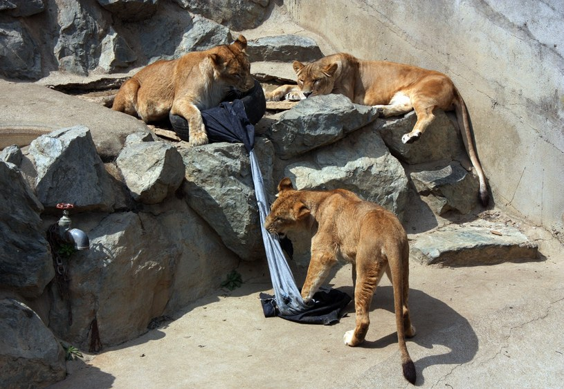 Zwierzęta szarpią dżinsy /AFP