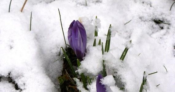 W kalendarzu zima, na drogach hałdy zmarzniętego śniegu. Kilka dni odwilży po mroźnych tygodniach sprawiły, że niemal wszyscy  z niecierpliwością wyczekują choćby najmniejszych oznak wiosny.  Jak choćby te z Poznania. W stolicy Wielkopolski zakwitły krokusy. Zobacz zdjęcia. Jeśli w Twojej okolicy też czuć i widać wiosnę, daj znać na Gorącą Linię RMF FM.
