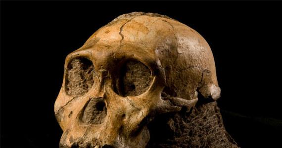 Dwa szkielety sprzed dwóch milionów lat odnalezione na terenie Republiki Południowej Afryki rzucają nowe światło na nieznany do tej pory okres ewolucji człowieka. Szczątki dwóch  osobników gatunku człowiekowatych, nazwanego Australopithecus sediba znaleziono dwa lata temu w stosunkowo dobrym stanie, w jaskini około 40 kilometrów od Johannesburga.