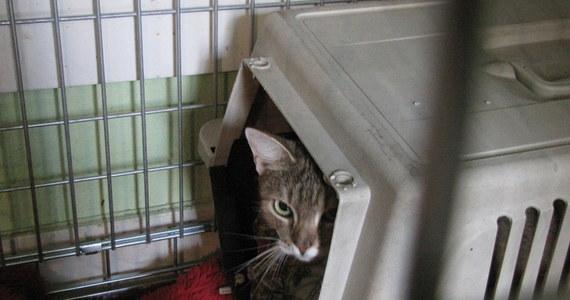 Marika, kotka z brutalnego filmu zamieszczonego w internecie, ma już nowy dom. Zwierzę trafiło z krakowskiego schroniska do tymczasowego właściciela. Niewykluczone, że zostanie u niego na zawsze. 15-latek, który nakręcił sadystyczny film czeka na rozprawę sądową.