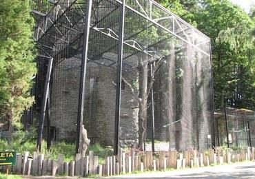 Kondor Wielki wykluł się w gdańskim zoo