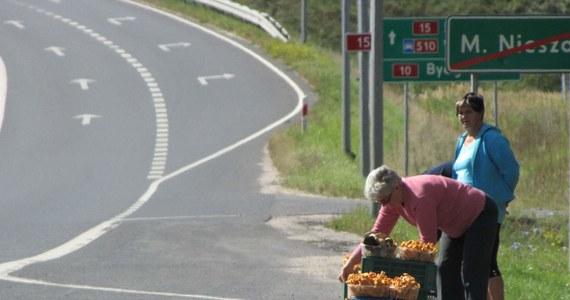 W kilku miejscach województwa kujawsko-pomorskiego obowiązuje całkowity zakaz wstępu do lasów. Ma on związek z walką z pasożytami sosen; dotyczy pasa Puszczy Bydgoskiej i części lasów wokół Torunia. Leśnicy ostrzegają: miłośnicy grzybów muszą obejść się smakiem.