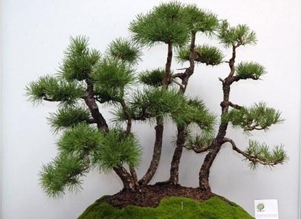 Drzewko W Doniczce Kobieta W Interiapl