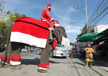 Słoń - Święty Mikołaj w Tajlandii