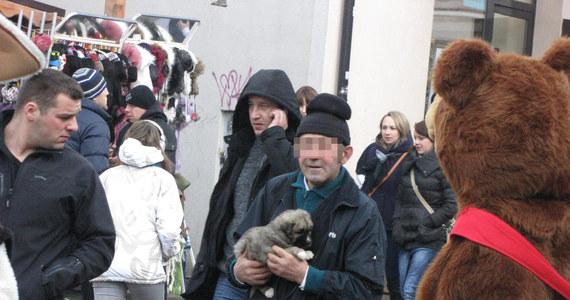Handlarze w Zakopanem nic sobie nie robią z obowiązującej od 1 stycznia nowej ustawy o ochronie zwierząt. Mimo zakazu sprzedaży psów na targowiskach czy giełdach, dalej jakby nigdy nic oferują szczeniaki w tłumie turystów pod Gubałówką czy na Krupówkach.