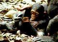 Grozi nam Planeta Małp