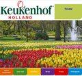 Holendrzy wyhodowali nowy rodzaj tulipana. Nazywa się Anna Komorowska
