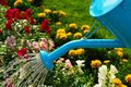 Kreatywny ogród
