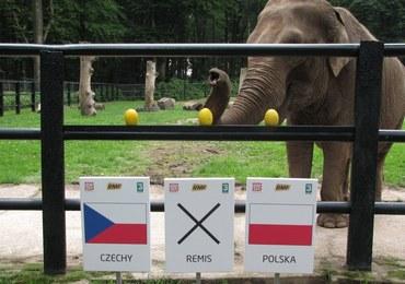 Citta typuje: Polska czy Czechy? Będzie remis