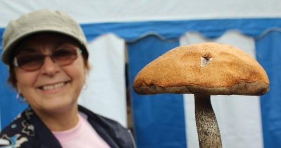 W Wielbarku w województwie warmińsko-mazurskim odbył się piąty Festiwal Grzybów - Grzybobranie. Tradycyjnie impreza rozpoczęła się drużynowymi zawodami w zbieraniu grzybów. W tym roku szukano najcięższego okazu. Zwyciężyła reprezentacja gminy Wielbark.