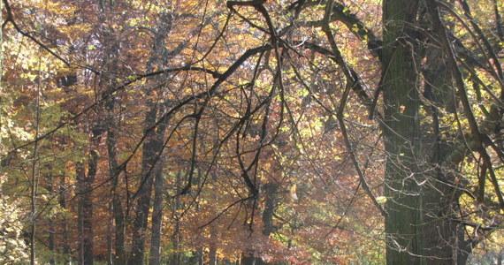 Dziś jest ostatni pełny dzień lata. Jutro o 16:49 Słońce znajdzie się w punkcie Wagi - rozpoczynając tym samym astronomiczną jesień...