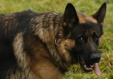 Dlaczego psy można tresować, a wilków nie