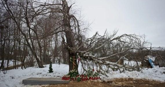 Nowe fakty ze śledztwa w sprawie katastrofy smoleńskiej: na przełomie lutego i marca prokuratorzy oraz biegli pojadą do Rosji badać brzozę. Zabezpieczone jesienią zeszłego roku fragmenty drzewa, o które miał uderzyć prezydencki TU-154M zostaną zbadane wspólnie przez stronę polską i rosyjską.