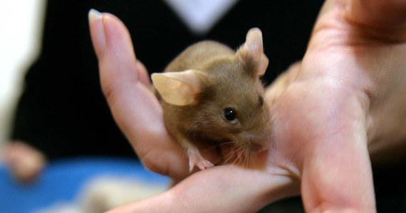Myszy pogryzły i zniszczyły 7,2 tys. juanów (ok. 3,6 tys. złotych) - oszczędności rodziny robotnika napływowego z Szanghaju we wschodnich Chinach. Przechowywane w szafie banknoty padły łupem gryzoni, które posiekały je zębami na tysiące małych kawałeczków.