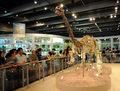 Odkryto najstarsze zarodki dinozaurów