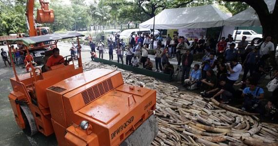 Pięć ton skonfiskowanych kłów słoni, wartych około 10 milionów dolarów, zniszczono na Filipinach. Kły pochodzące z nielegalnego przemytu z Zambii, Tanzanii i Ugandy, skonfiskowane w latach 1996-2009, zostały zmiażdżone, a następnie spalone. Filipiny, leżące na trasie światowych szlaków przemytniczych, jako pierwsze państwo w Azji zdecydowały się na taki krok.