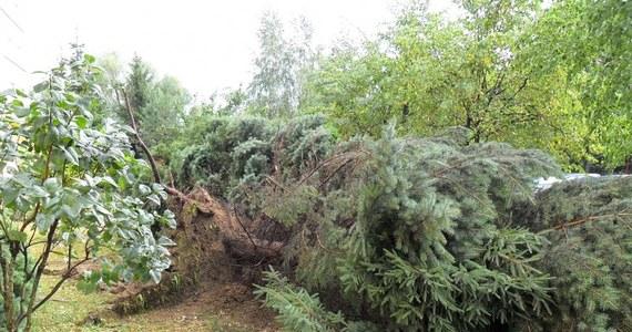 Ponad 70 razy interweniowali podkarpaccy strażacy po burzach, które przeszły przez region we wtorek po południu. W trakcie nawałnicy ranne zostały dwie osoby - na samochód, którym jechały zawaliło się drzewo. Od Was na Gorącą Linię RMF FM otrzymaliśmy zdjęcia powyrywanych z korzeniami drzew.