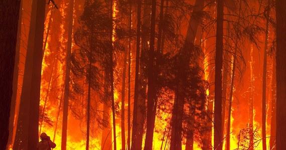 Katastrofalny pożar lasów i zarośli w Kalifornii spowodowało nielegalnie rozpalone przez myśliwego ognisko, które wymknęło się spod kontroli - ujawnili przedstawiciele federalnej Służby Leśnej. Płomienie, podsycane przez wiatr, błyskawicznie rozprzestrzeniły się.